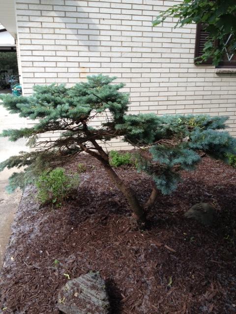 My Amazing New Bush